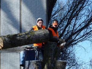 Comment pratique-t-on l'abattage d'arbre ?