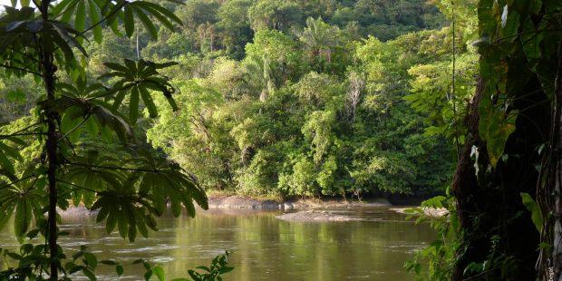 La Guyane : une terre française au milieu de l'Amazonie