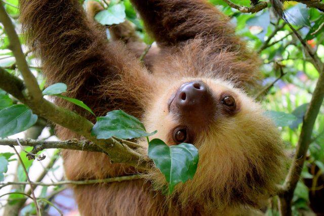 Mettre en avant son âme d'aventurier via trois activités au Costa Rica